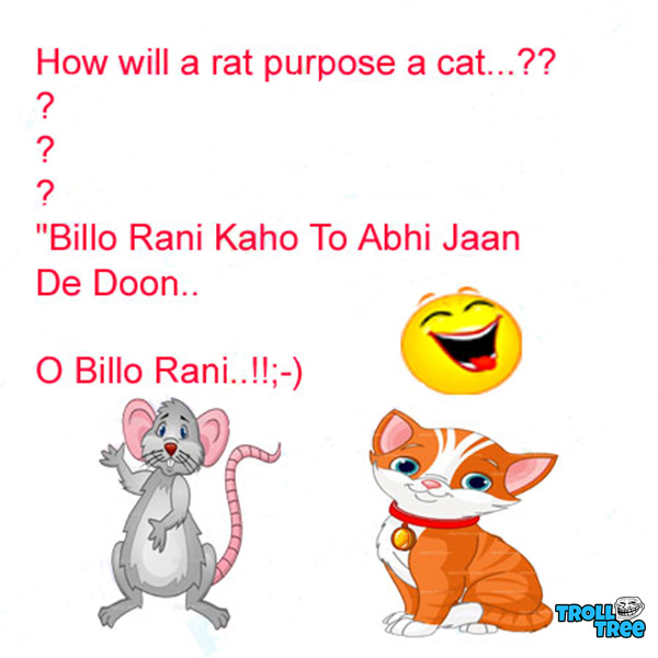 How Will A Rat Purpose A Cat